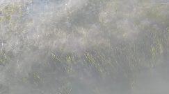 Nature, Outdoors, Weather, Fog, Mist, Plant, Grass, Animal, Mammal, Water, Ocean, Sea, Deer, Elk, Wildlife