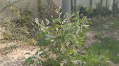Plant, Vegetation, Jar, Vase, Potted Plant, Pottery, Grass, Planter, Tree, Outdoors, Herbs, Flower, Blossom, Land, Nature