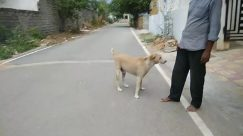 Human, Person, Town, Street, Building, Road, City, Urban, Pet, Mammal, Animal, Dog, Canine, Clothing, Apparel