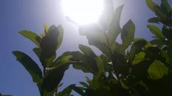 Sunlight, Plant, Leaf, Vegetation, Flare, Light, Nature, Outdoors, Land, Tree, Rainforest, Jungle, Sun, Sky, Green
