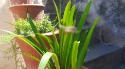 Plant, Vase, Jar, Potted Plant, Pottery, Planter, Herbs, Vegetation, Flower, Blossom, Outdoors, Herbal, Aloe, Nature, Yard