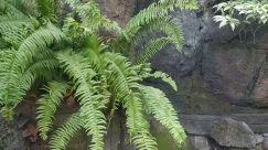 Rock, Water, Plant, Nature, Outdoors, Fern, Animal, Turtle, Sea Life, Reptile, Pond, Zoo, Slate, Tree, Vegetation