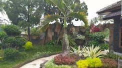 Plant, Outdoors, Garden, Arbour, Vegetation, Nature, Yard, Agavaceae, Tree, Jar, Vase, Pottery, Potted Plant, Land, Rainforest