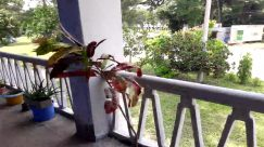 Plant, Banister, Handrail, Railing, Garden, Arbour, Balcony, Porch, Tree, Pottery, Vase, blowing, Wind