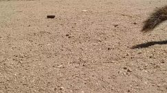 Soil, Ground, Land, Nature, Outdoors, Gravel, Road, Dirt Road, Sand, Animal, Mammal, Rug, Rodent, Water, Pig