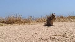 Person, Soil, Ground, Nature, Outdoors, Sand, Animal, Mammal, Wildlife, Road, Rodent, Cheetah, Squirrel, Grass, Plant