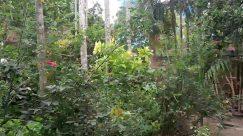 Plant, Vegetation, Outdoors, Tree, Garden, Pottery, Vase, Jar, Potted Plant, Arbour, Nature, Land, Planter, Herbs, Jungle