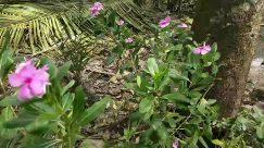 Plant, Vegetation, Blossom, Flower, Geranium, Petal, Vase, Pottery, Jar, Potted Plant, Outdoors, Planter, Herbs, Herbal, Anemone