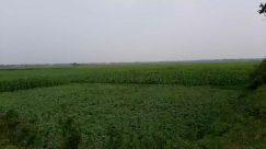 Field, Nature, Grassland, Outdoors, Land, Grass, Plant, Countryside, Paddy Field, Vegetation, Rural, Farm, Animal, Bird, Pasture
