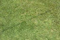 Grass, Lawn, Plant, Field, Grassland, Vegetation, Moss