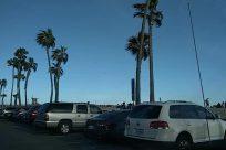 Vehicle, Car, Automobile, Transportation, Tree, Plant, Person, Arecaceae, Palm Tree, Parking Lot, Parking, Wheel, Machine, License Plate, Suv