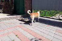Canine, Dog, Pet, Flagstone, Path, Walkway, Slate, Strap, Reptile, Zoo, Plant, Brick, Lizard, Iguana, Sidewalk