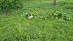 Plant, Vegetation, Jar, Vase, Pottery, Potted Plant, Grass, Yard, Planter, Herbs, Bush, Herbal, Land, Forest, Tree