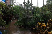 Plant, Vegetation, Land, Tree, Rainforest, Yard, Forest, Woodland, Water, Grove, Jungle, Building, Urban, Shelter, Rural