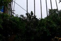 Plant, Vegetation, Land, Rainforest, Tree, Jungle, Woodland, Forest, Grove, Building, Potted Plant, Pottery, Vase, Jar, Urban