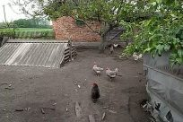 Yard, Bird, Zoo, Backyard, Countryside, Rural, Building, Shelter, Fowl, Poultry, Hen, Chicken, Soil, Brick, Land
