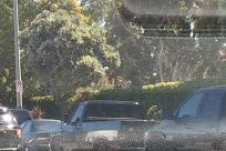 Automobile, Vehicle, Car, Plant, Vegetation, Van, Sedan, Caravan, Police Car, Windshield, Car Wash, Bumper, Land, Tree, Bush