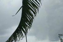 Plant, Arecaceae, Tree, Palm Tree, Bird, Building, Bridge, Vegetation, Shoreline, Water, Sea, Ocean, Leaf, Coast, Arrow