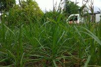 Plant, Vegetation, Grass, Bush, Pottery, Vase, Potted Plant, Jar, Leaf, Agavaceae, Blossom, Flower, Planter, Herbs, Tree