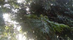 Plant, Vegetation, Jungle, Land, Tree, Rainforest, Woodland, Forest, Grove, Flare, Light, Sunlight, Tree Trunk, Garden, Arbour