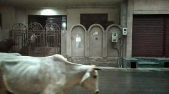 Cattle, Cow, Bull, Ox, Wheel, Horse, Vehicle, Gate, Path, Walkway, Crypt, Flagstone, Building, Home Decor, Water