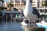 Bird, Water, Waterfront, Harbor, Port, Pier, Dock, Seagull, Marina, Beak, Urban, Vehicle, Building, Town, City