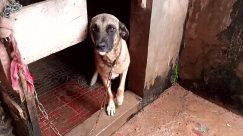 Dog, Canine, Pet, Den, Dog House, German Shepherd, Hound, Slate, Brick, Kennel, Building, Puppy, Countryside, Rural, Flagstone
