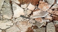 Rock, Rubble, Soil, Wall, Slate, Brick, Flagstone, Wood, Bird, Ground, Archaeology, Tree, Plant, Limestone, Crystal