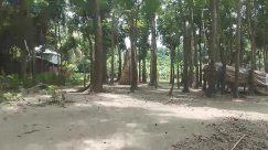 Plant, Vegetation, Land, Tree, Jungle, Rainforest, Woodland, Forest, Path, Trail, Grove, Tree Trunk, Root, Ground, Elephant