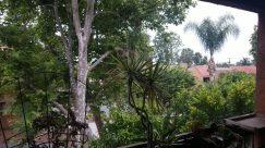 Plant, Garden, Arbour, Tree, Vegetation, Yard, Housing, Building, Tree Trunk, House, Cottage, Land, Woodland, Forest, Rainforest