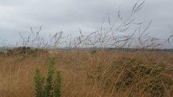 Grass, Plant, Vegetation, Bush, Lawn, Tree, Land, Field, Grassland, Reed, Landscape, Jar, Vase, Pottery, Potted Plant