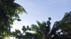 Plant, Vegetation, Tree, Arecaceae, Palm Tree, Land, Rainforest, Jungle, Summer, Woodland, Forest, Tropical, Green, Grove, Building
