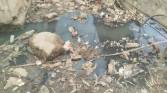 Pollution, Rubble, Soil, Rock, Urban, Bird, Trash, Building, Earthquake, Slum, Ground