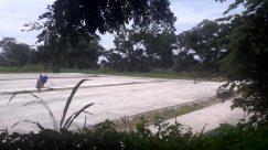 Plant, Vegetation, Grass, Tree, Land, Forest, Woodland, Bird, Grove, Bush, Green, Field, People, Sport, Sports