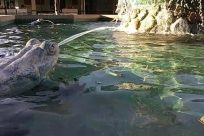 Water, Rock, Sea Life, Zoo, Pool, Aquatic, Reptile, Seal, Tortoise, Turtle, Swimming Pool, Fountain, Sea Lion, Plant, Statue