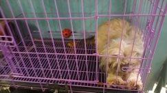 Bird, Fowl, Poultry, Chicken, Den, Dog House, Pet, Kennel, Canine, Dog, Affenpinscher, Rodent, Cat, Electronics, Building