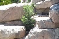 Rock, Zoo, Slate, Plant, Vegetation, Bush, Flagstone, Rubble, Soil, Grass, Water, Kit Fox, Wildlife, Canine, Fox