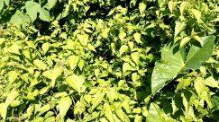 Plant, Vegetation, Bush, Leaf, Tree, Food, Pottery, Jar, Vase, Potted Plant, Green, Grass, Citrus Fruit, Fruit, Land
