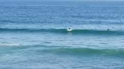 Ocean, Sea, Water, Sea Waves, Sport, Sports, Surfing, Shoreline, Coast, Beach, Swimming, Bird, Vehicle, Surfboard, Building