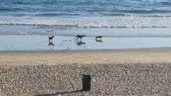 Water, Shoreline, Sea, Ocean, Sand, Coast, Beach, Canine, Dog