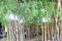 Bamboo, Vegetation, Plant, Tree, Land, Jungle, Rainforest, Rock, Forest, Woodland, Grove, Tin, Barrel, Grass, Can