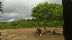 Weather, Vehicle, Motorcycle, Bike, Bicycle, Plant, Tree, Field, Grassland, Cable, Motor, Road, Palm Tree, Arecaceae, Vegetation