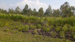 Plant, Vegetation, Bush, Field, Land, Ground, Tree, Grassland, Countryside, Grass, Yard, Rural, Wilderness, Woodland, Forest