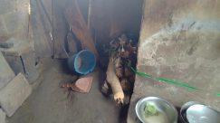 Plant, Bowl, Wood, Soil, Pottery, Food, Meal, Fish, Helmet, Dish, Produce, Building, Arrow, Symbol, Canine