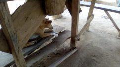 Wood, Plywood, Lumber, Hardwood, Housing, Building, Flooring, Pet, Canine, Dog, Cat, Furniture, Tabletop, Driftwood, Archaeology