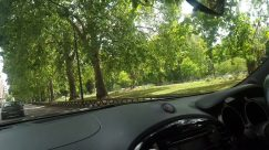 Plant, Vegetation, Tree, Woodland, Land, Forest, Grove, Automobile, Car, Vehicle, Mirror, Tree Trunk, Car Mirror, Jungle, Grass