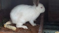 Rodent, Hare, Wildlife, Bear, Cat, Pet, Bunny, Rabbit, Rat, Giant Panda, Angora, Wood