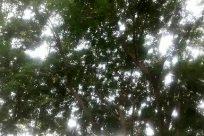 Plant, Vegetation, Tree, Land, Woodland, Forest, Rainforest, Grove, Jungle, Sunlight, Flare, Light, Oak, Sky, Sun