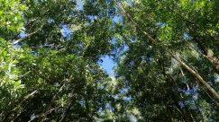 Plant, Vegetation, Woodland, Forest, Tree, Land, Grove, Rainforest, Jungle, Bush, Tree Trunk, Conifer, Sunlight, Green, Abies