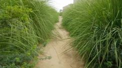 Grass, Plant, Ditch, Vegetation, Soil, Lawn, Path, Bush, Land, Field, Forest, Tree, Woodland, Trail, Ground